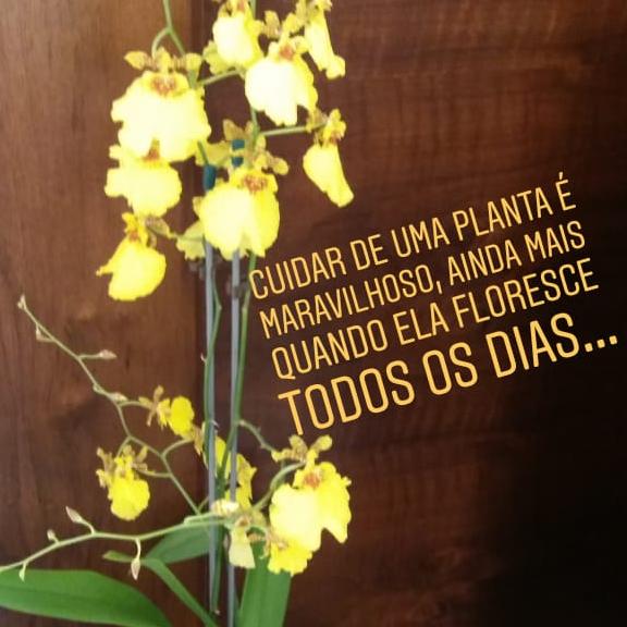 Fabiana  Sanches