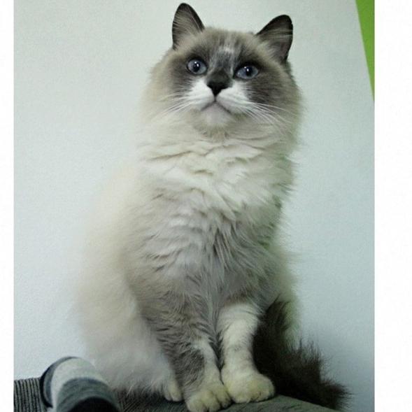 Missi Cat